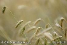 Ori Obere-Nahe 2014_123
