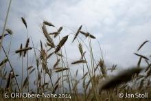 Ori Obere-Nahe 2014_127